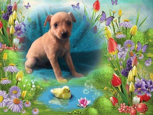 PuppyFind.com,223800