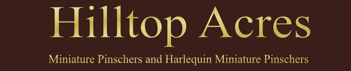Hilltop Acres, Home of the Hilltop Harlequin Pinschers